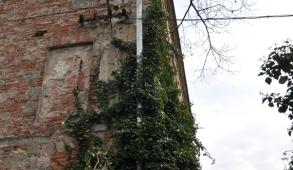 Zámecké zdi porostlé břečťanem